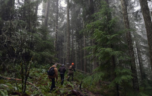 Out in the woods with Signal Fire